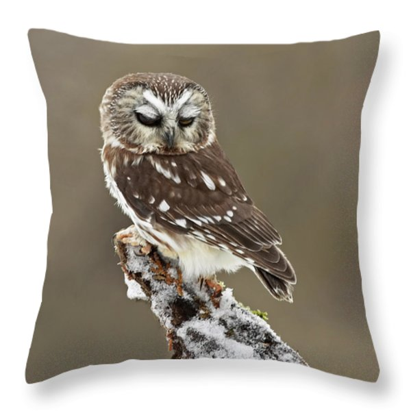 Saw Whet Owl Sleeping In A Winter Forest Throw Pillow by Inspired Nature Photography By Shelley Myke
