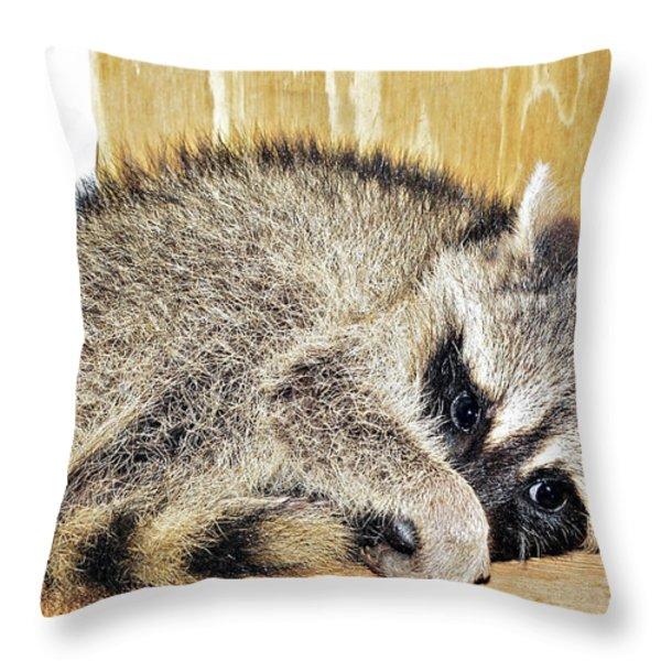 Scared Raccoon Throw Pillow by Susan Leggett