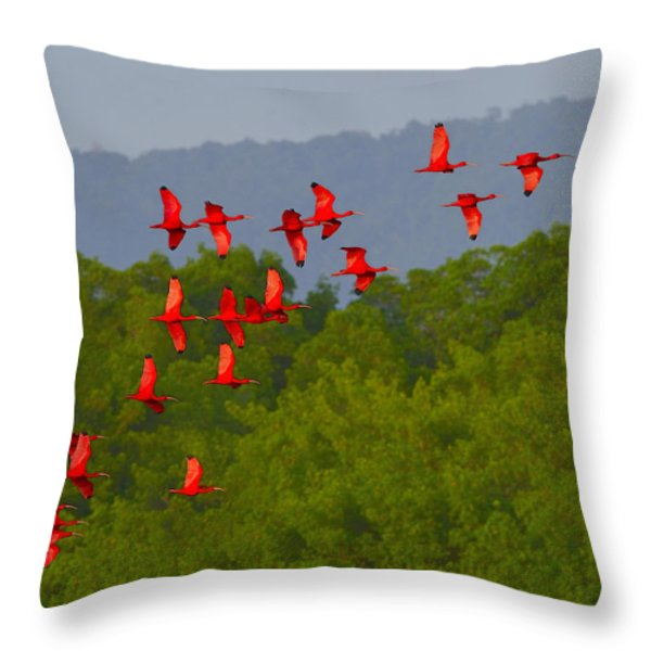 Scarlet Ibis Throw Pillow by Tony Beck