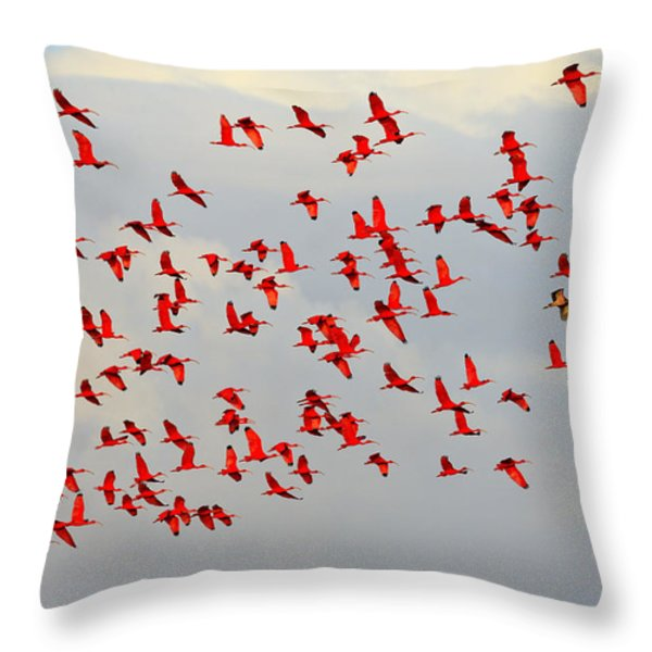 Scarlet Sky Throw Pillow by Tony Beck