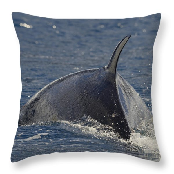 Scratching The Surface Throw Pillow by Tony Beck