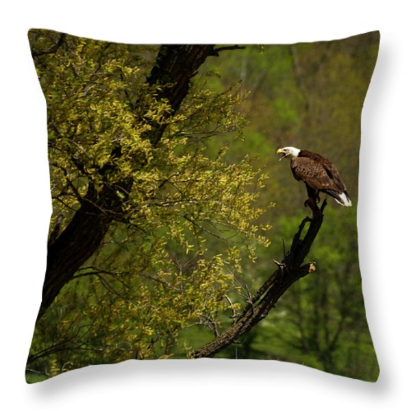 Screaming Eagle Throw Pillow by Thomas Young