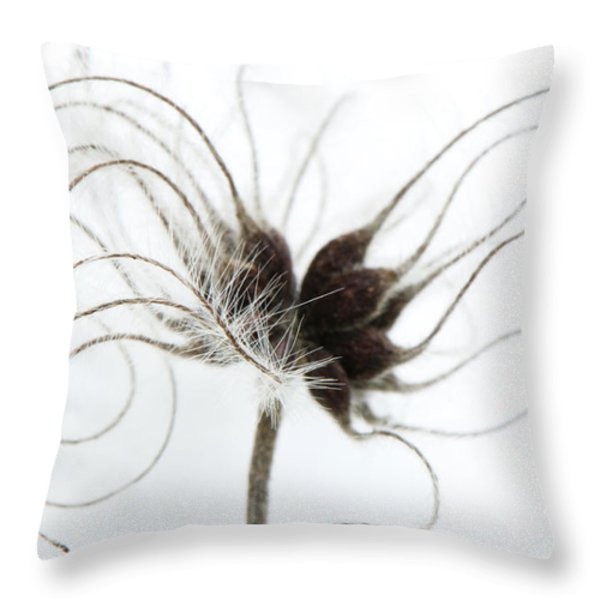 Seeds Throw Pillow by Anne Gilbert