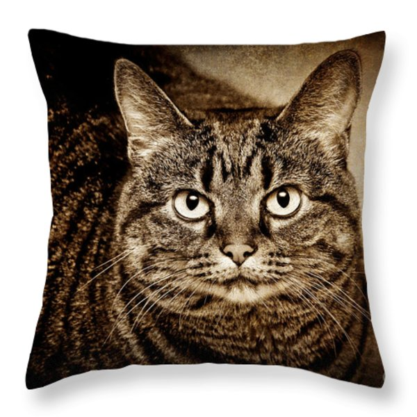 Serious Tabby Cat Throw Pillow by Andee Design