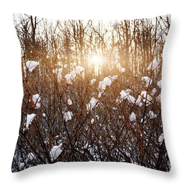 Setting sun in winter forest Throw Pillow by Elena Elisseeva