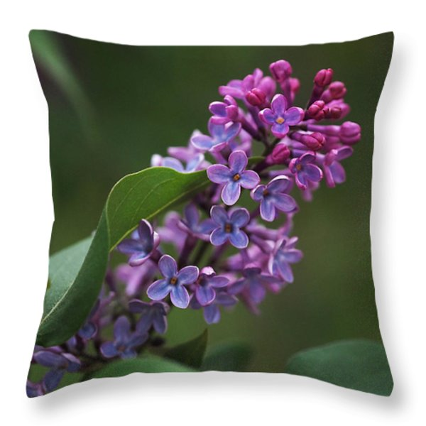 Shades Of Lilac Throw Pillow by Rona Black