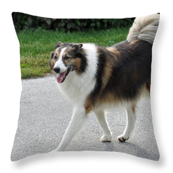 Sheba Throw Pillow by Lisa  Phillips