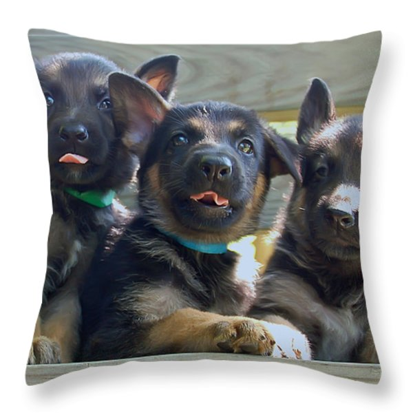 Shepherd Pups 3 Throw Pillow by Aimee L Maher Photography and Art