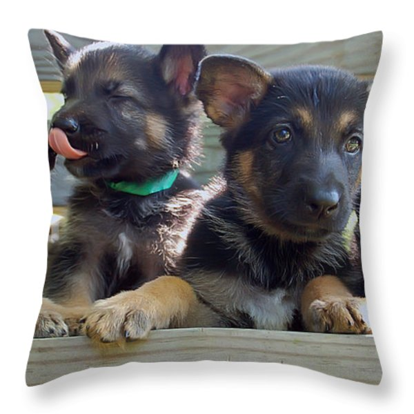 Shepherd Pups 5 Throw Pillow by Aimee L Maher Photography and Art