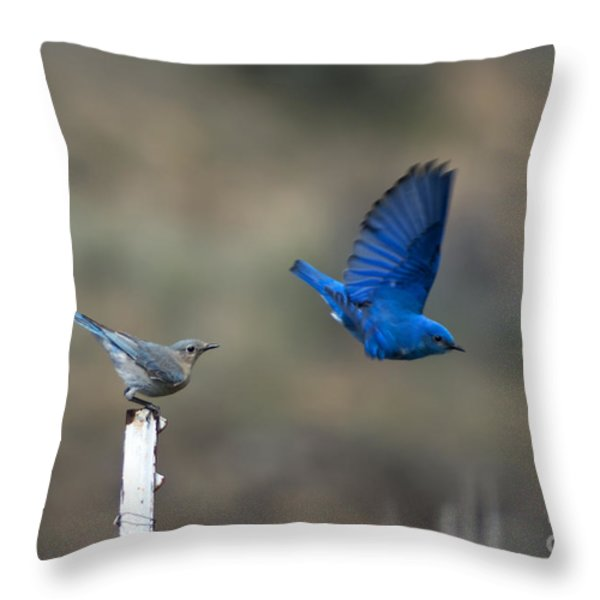 Showing Off Throw Pillow by Mike  Dawson