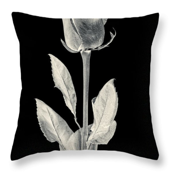 Silver Rose Throw Pillow by Adam Romanowicz