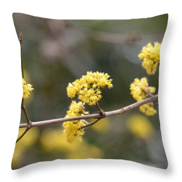 Silver Wattle In Spring Throw Pillow by Maria Urso