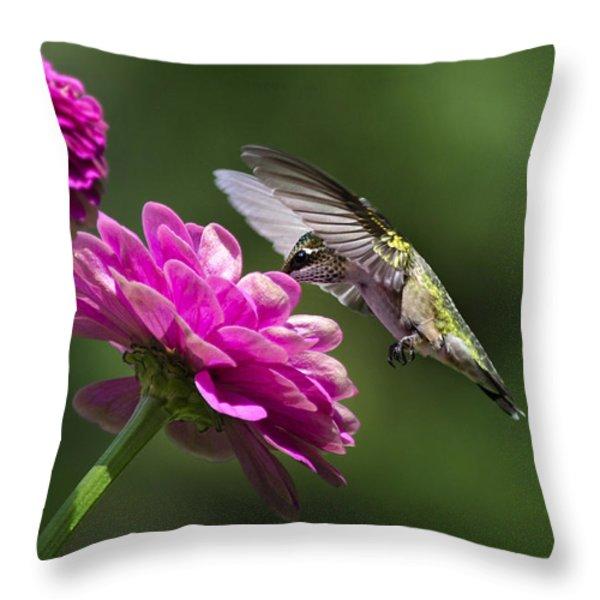 Simple Pleasure Hummingbird Delight Throw Pillow by Christina Rollo