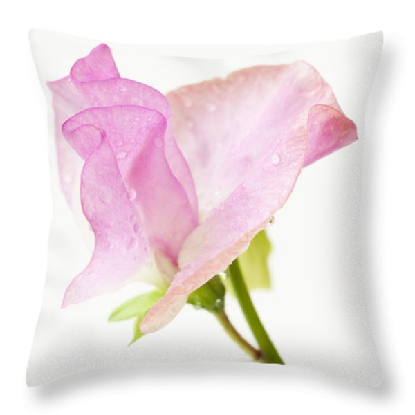 Simply Sweet Pea Throw Pillow by Anne Gilbert