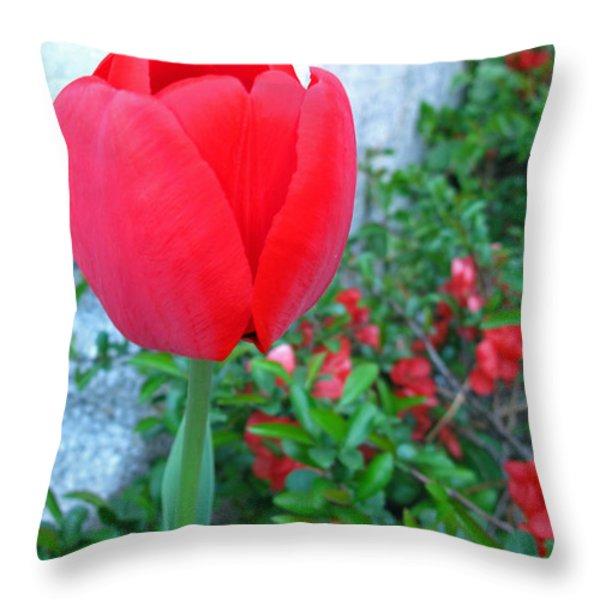 Single Red Tulip Throw Pillow by Barbara McDevitt