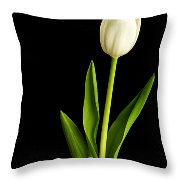 Single White Tulip Over Black Throw Pillow by Edward Fielding