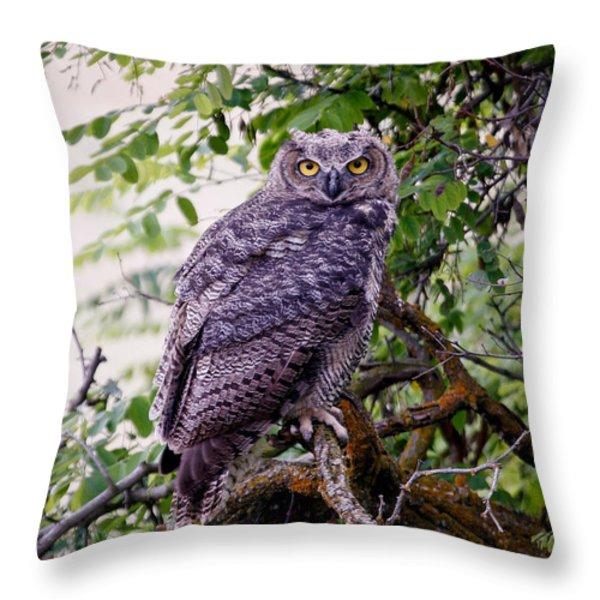 Sitting Owl Throw Pillow by Athena Mckinzie