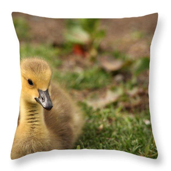 Sitting Pretty Throw Pillow by Karol  Livote