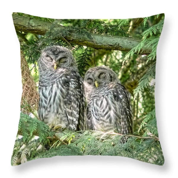 Sleeping Barred Owlets Throw Pillow by Jennie Marie Schell