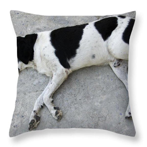 Sleeping Dog Lying On The Ground Throw Pillow by Matthias Hauser