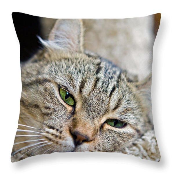Sleepy Green Eyes Throw Pillow by Susan Leggett