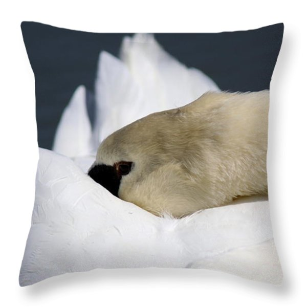 Snoozer - Swan Throw Pillow by Travis Truelove