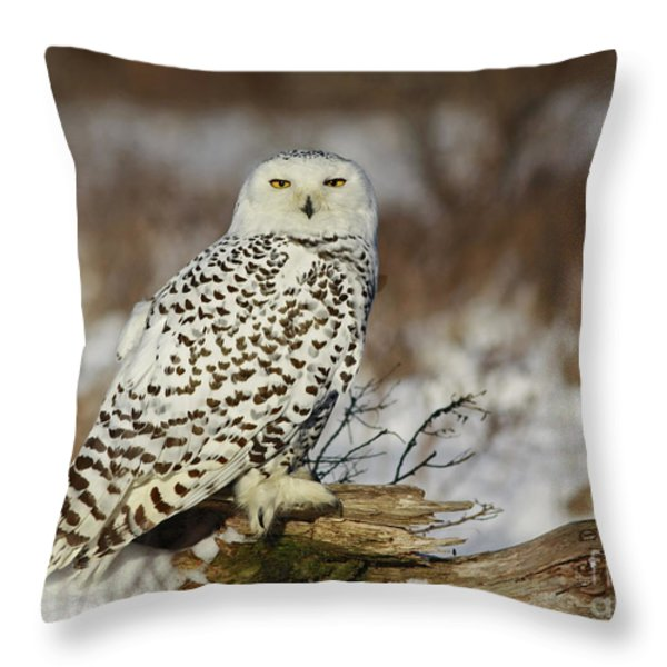 Snowy Owl At Sunset Throw Pillow by Inspired Nature Photography By Shelley Myke