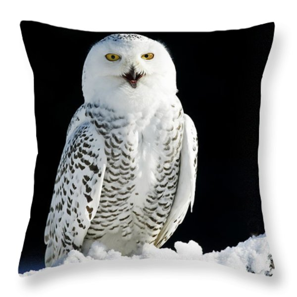 Snowy Owl on a Twilight Winter Night Throw Pillow by Inspired Nature Photography By Shelley Myke