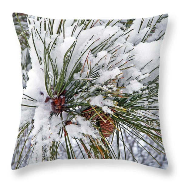 Snowy Pine Throw Pillow by Aimee L Maher Photography and Art
