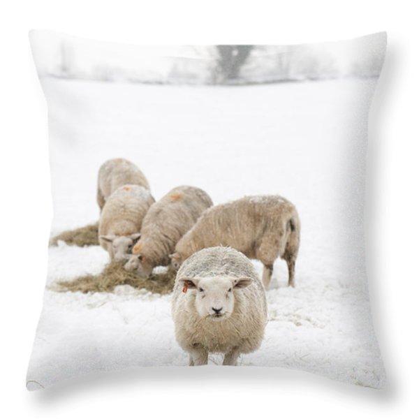 Snowy Sheep Throw Pillow by Anne Gilbert