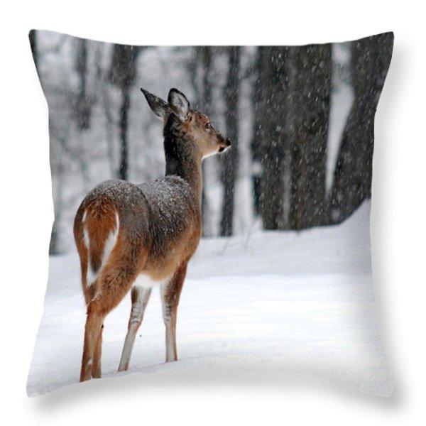 Snowy White-Tail Throw Pillow by Christina Rollo