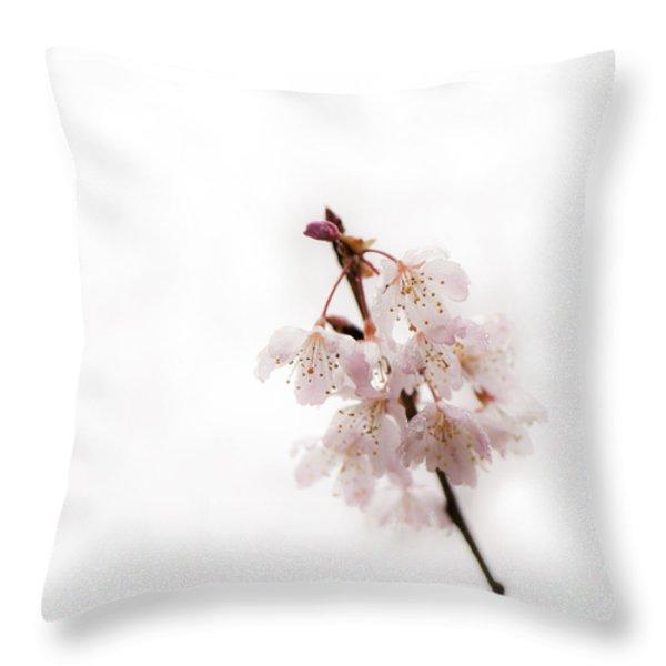 Soft Cherry Plum Throw Pillow by Anne Gilbert