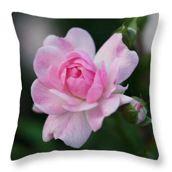 Soft Pink Miniature Rose Throw Pillow by Rona Black
