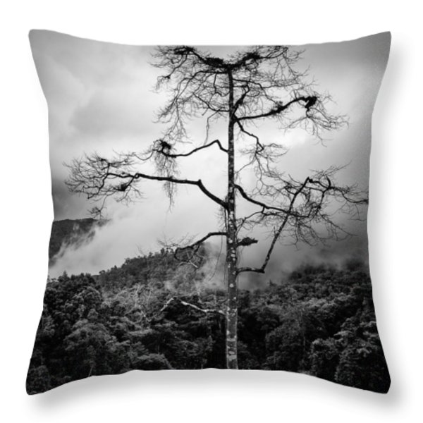 Solitary Tree Throw Pillow by Dave Bowman