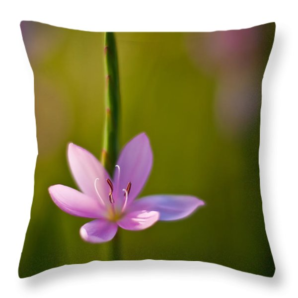 Solo Crocus Throw Pillow by Mike Reid