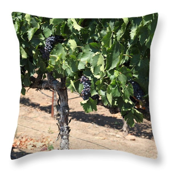 Sonoma Vineyards In August In The Sonoma California Wine Country 5D24487 Throw Pillow by Wingsdomain Art and Photography