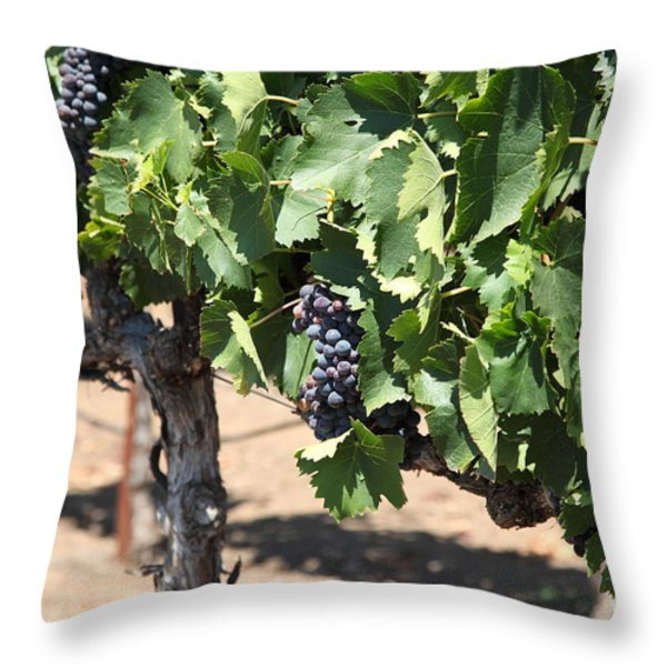Sonoma Vineyards In The Sonoma California Wine Country 5d24488 Throw Pillow by Wingsdomain Art and Photography