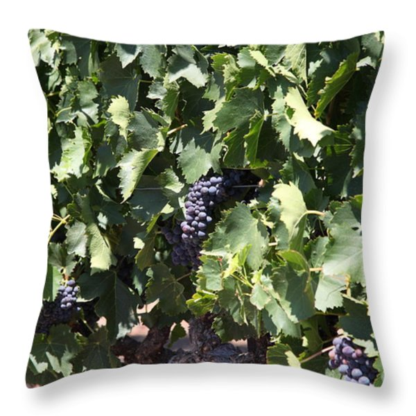Sonoma Vineyards In The Sonoma California Wine Country 5d24489 Throw Pillow by Wingsdomain Art and Photography