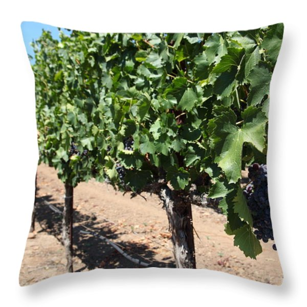 Sonoma Vineyards In The Sonoma California Wine Country 5d24491 Throw Pillow by Wingsdomain Art and Photography