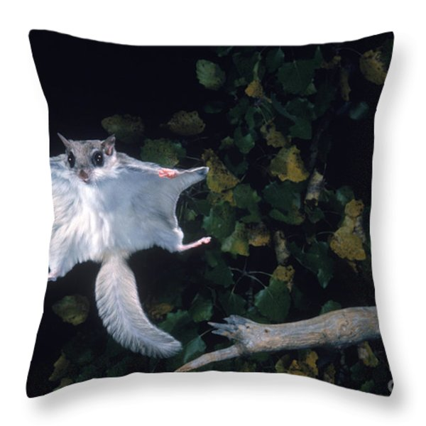 Southern Flying Squirrel Throw Pillow by Nick Bergkessel Jr