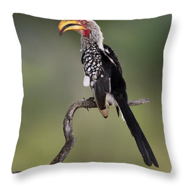 Southern Yellowbilled Hornbill Throw Pillow by Johan Swanepoel