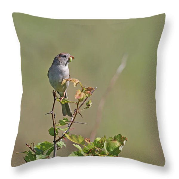 Sparrow Throw Pillow by Jim Nelson