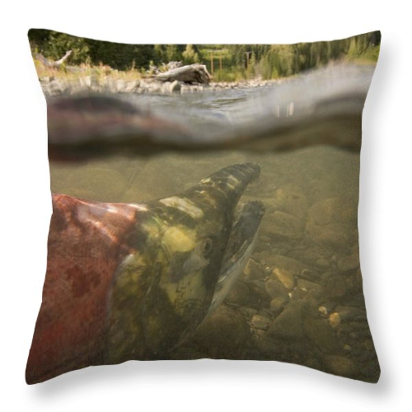Spawned Out Sockeye Salmon In Quartz Throw Pillow by Scott Dickerson