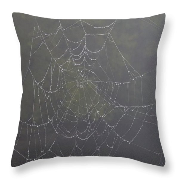 Spiderweb Throw Pillow by Allan Morrison