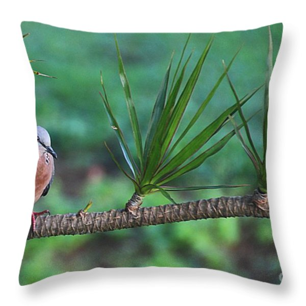 Spotted Dove Throw Pillow by Elizabeth Winter