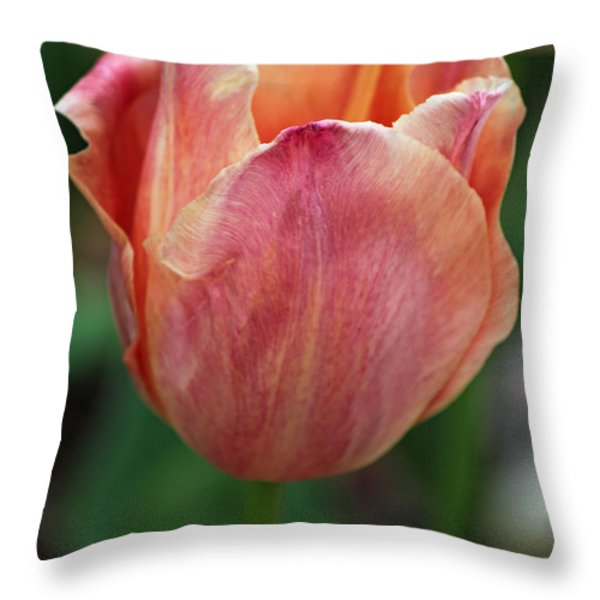 Spring Beauty Throw Pillow by Suzanne Gaff