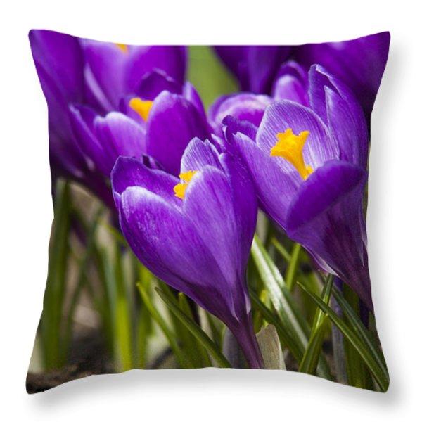 Spring Crocus Bloom Throw Pillow by Adam Romanowicz