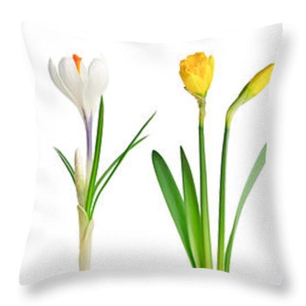 Spring flowers  Throw Pillow by Elena Elisseeva