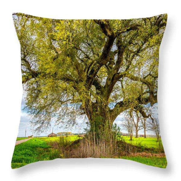 Spring On The Delta Throw Pillow by Steve Harrington