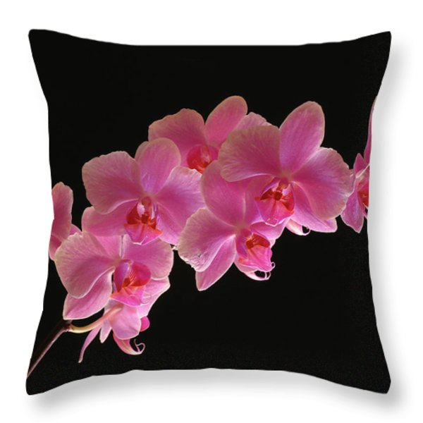 Spring Orchids Throw Pillow by Juergen Roth